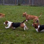 finger lakes pet resort dogs and facility