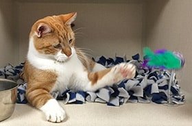 service cat boarding