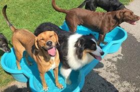 service dog daycare